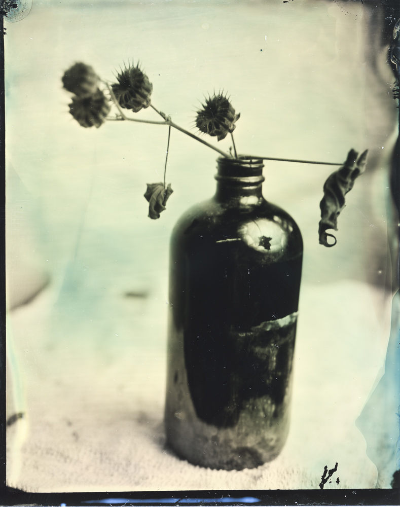 Still life of some seed pods taken with wet plate collodion by Lucas James.